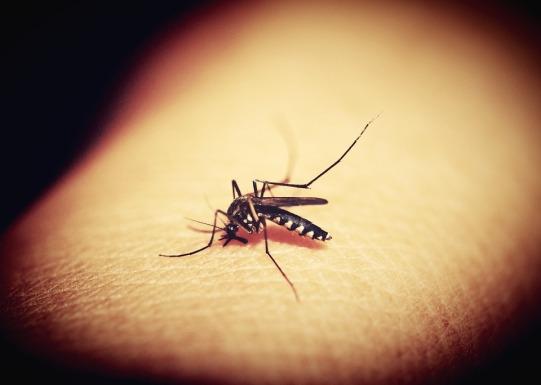 mosquitoe-1548975_960_720