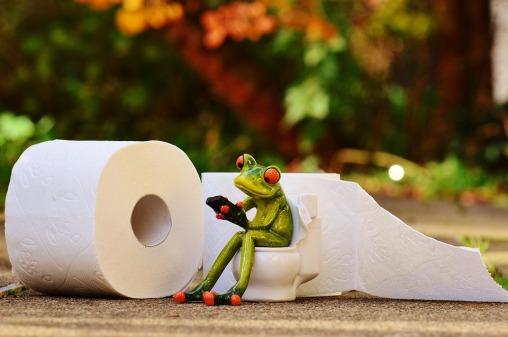 frog-1037252_960_720.jpg