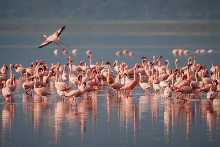 flamingos-1099071_960_720.jpg